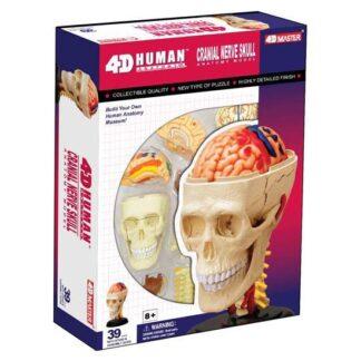 4D Anatoomiamudel Kolju