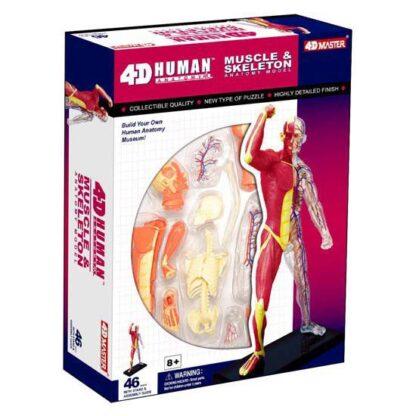 4D Anatoomiamudel Lihased ja skelett