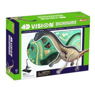 4D Anatoomiamudel Brachiosaurus