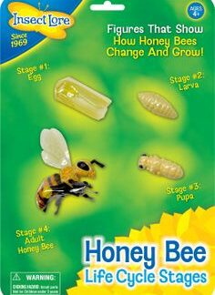 Mesilaste elutsükkel