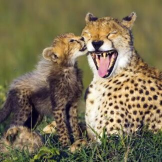 """3D postkaart """"Gepard"""""""