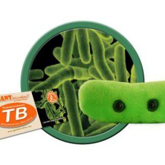 Tuberkuloos