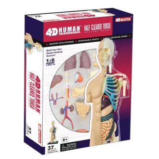 4D Anatoomiamudel Keha