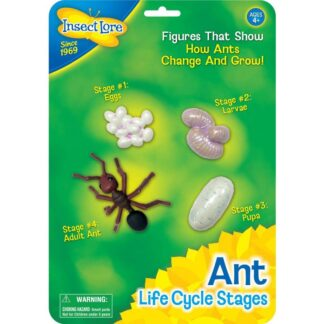 Sipelga elutsükkel