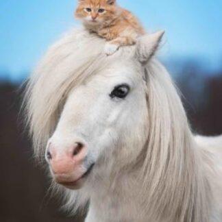 "3D postkaart ""Hobune ja kass"""