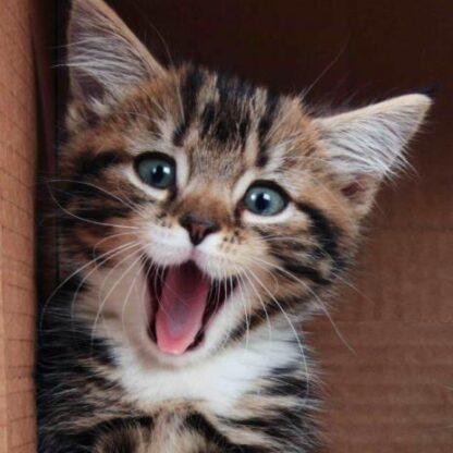 "3D postkaart ""Lõbus kassipoeg"""