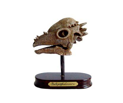 """Väljakaevamiskomplekt """"Pachycephalosauruse kolju"""""""