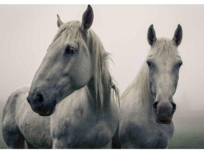 "3D postkaart ""Valged hobused"""